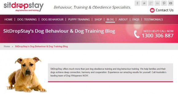 Sit Drop Stay Dog Training Blog